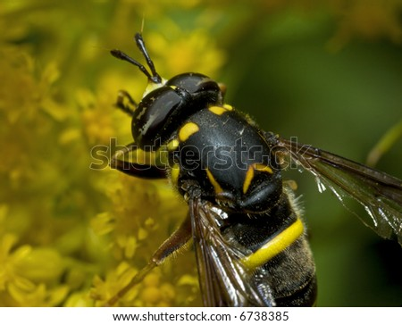 Wasp - stock photo