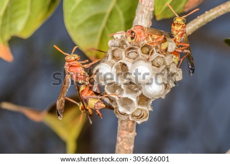 wasp and their building - stock photo