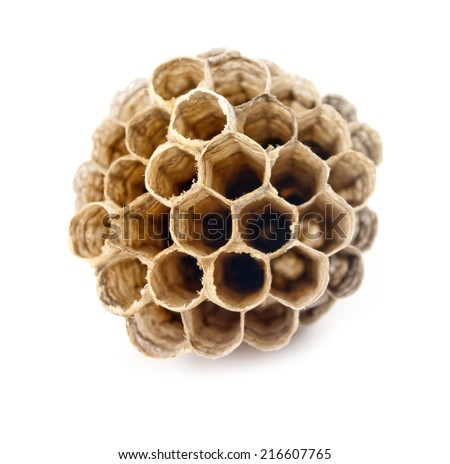 wasp hive isolated on white background  - stock photo