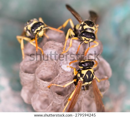 wasp macro - stock photo