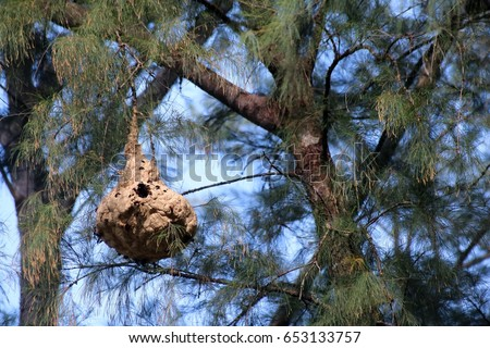 Hornet Hive In Tree