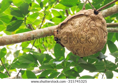 Wasp nest on the tree. - stock photo