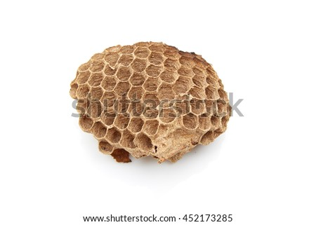 Wasp nest over white background