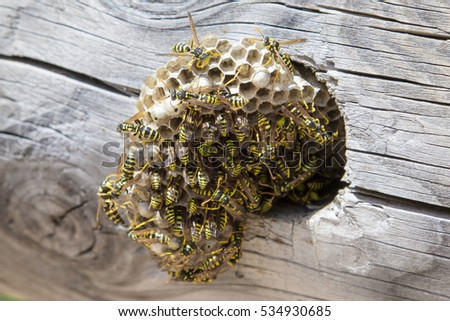 how to get rid of wasps nest in roof space