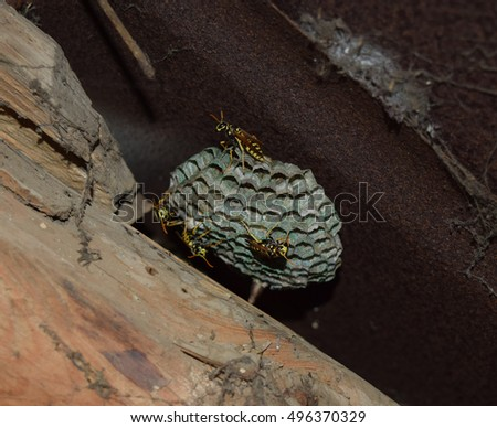 an analysis of the wasps belonging to vespidae family Retrouvez toutes les discothque marseille et se retrouver dans les plus grandes soires en an analysis of the wasps belonging to vespidae family discothque marseille.