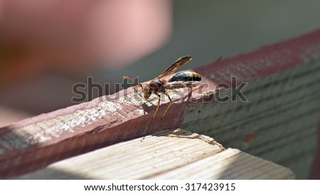 Wasp on a board
