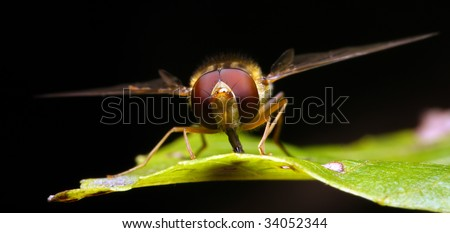 Wasp on a green leaf