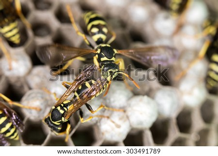 wasp on hives. close - stock photo