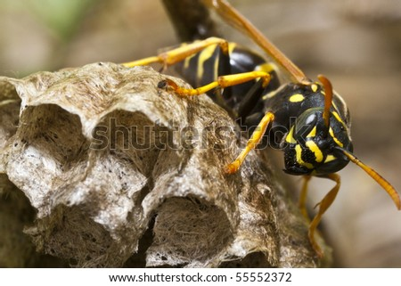 Wasp on Nest - stock photo
