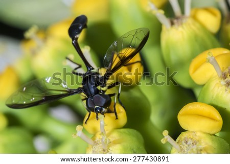 Wasp on the flower close up - Macro wasp  - stock photo