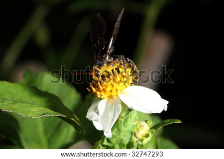 wasp with pollen - stock photo