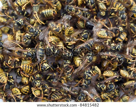 Wasps - stock photo
