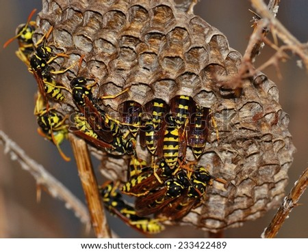Wasps around the nest - stock photo