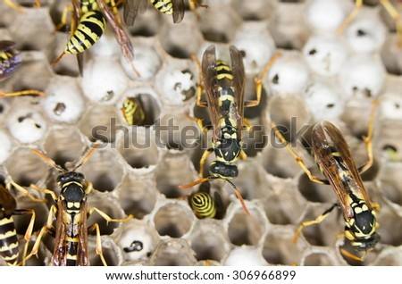 wasps. close - stock photo