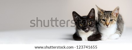 Watch kittens on white backgrounds - stock photo