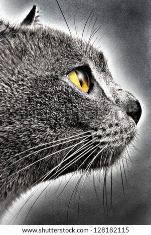Watchful cat with yellow eye - stock photo