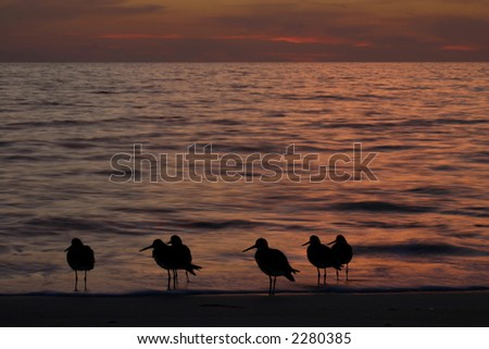 water birds against ocean sunset with orange glow clouds in background - stock photo