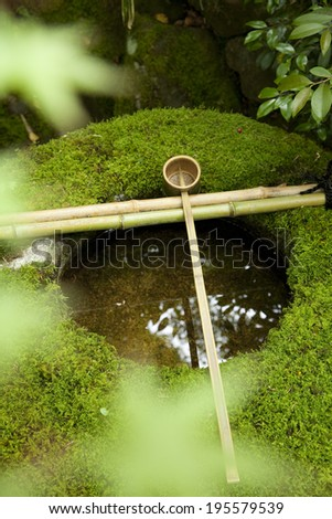 Water bowl with moss - stock photo
