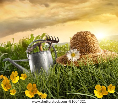 Water can and straw hat laying in field of corn with sun - stock photo