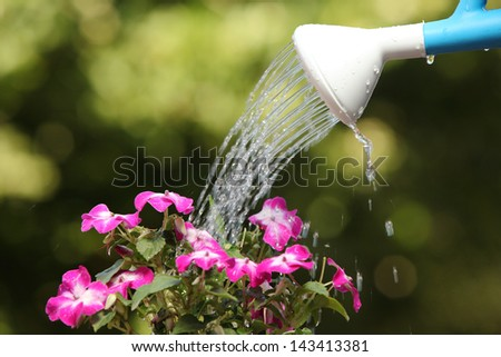 Water can watering a flower plant with a green unfocused background - stock photo