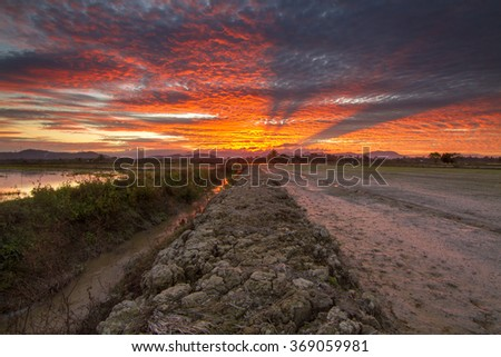 Water canal by the paddy field during beautiful sunset. Composition of nature