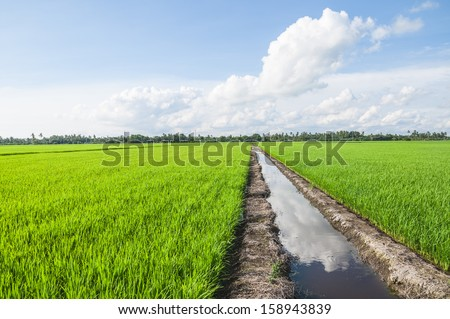 Water canal for paddy rice field irrigation. - stock photo
