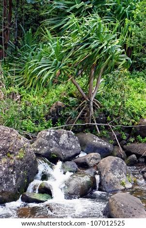 Water Cascading Down Rocks In Botanical Gardens ; Limahuli National  Tropical Botanical Gardens Kauai Hawaii