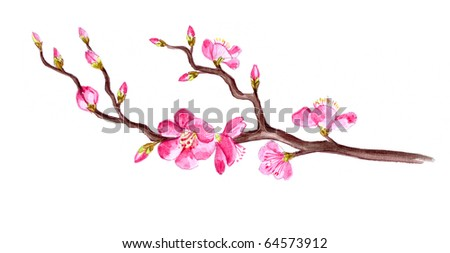 Water-colour illustration   of a spring blossom
