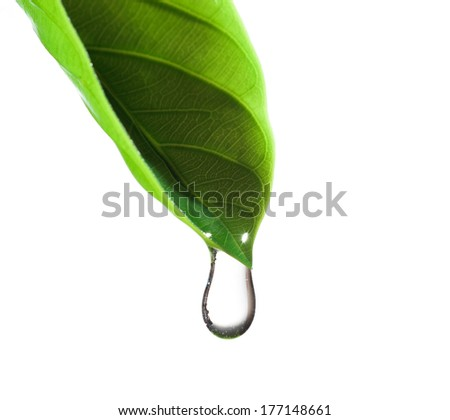 water drop and green leaf - stock photo