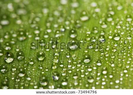 water drop dew background on a green leaf - stock photo