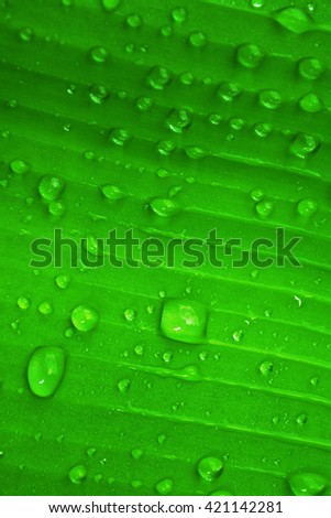 water drop ,dew drops on green leaf texture fresh spring nature background - stock photo