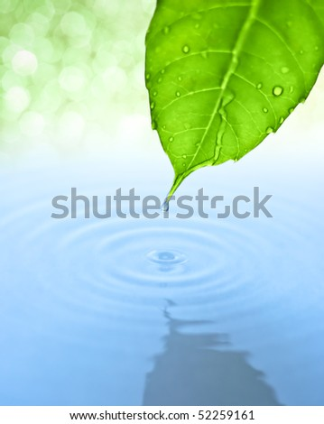 Water drop fall from green leaf with ripple - stock photo