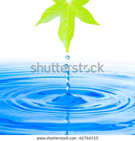 Water drop from green leaf