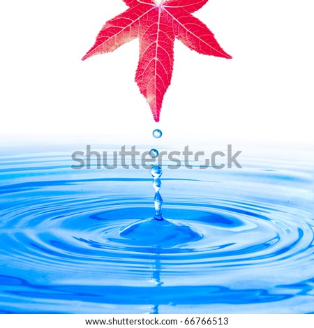 Water drop from red leaf
