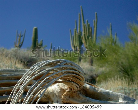 how to get water from barrel cactus