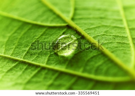 Water Drop on a fresh green leaf - stock photo