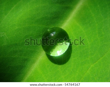 Water drop on a green leaf - stock photo