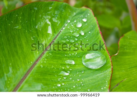 Water drop on banana leaf - stock photo