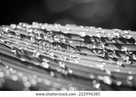 water drop on banana leaf black and white - stock photo
