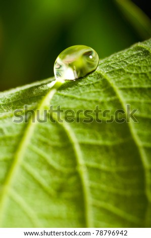 water drop on fresh green leaf with blurred background - stock photo