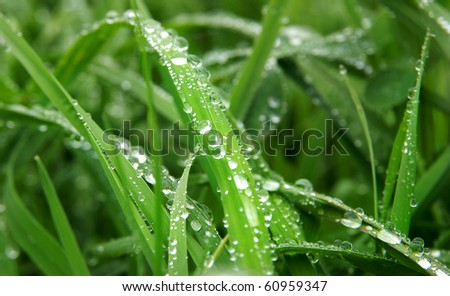 Water Drop on Grass - stock photo