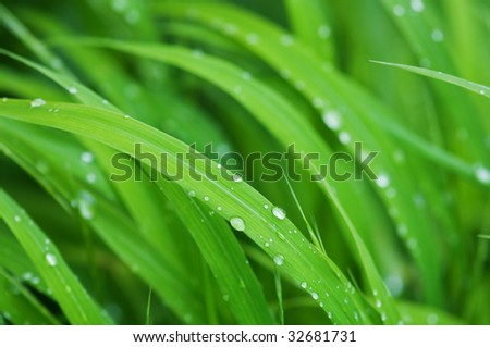 water drop on green grass - stock photo