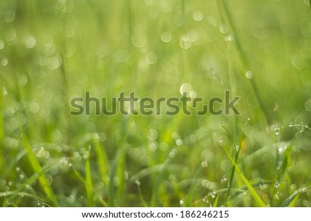 water drop on green grass and bokeh