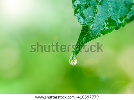 Water drop on green leaf. - stock photo