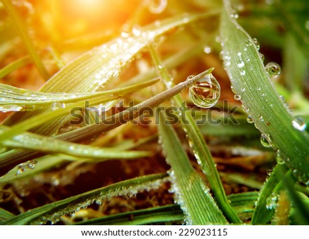 Water drop on green leaf. Morning grass in summer time. - stock photo