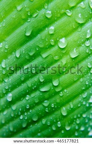 Water drop on green leaves blur