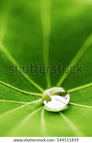 Water drop on green Nasturtium leaf macro - stock photo