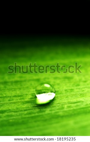water-drop on green plant - stock photo