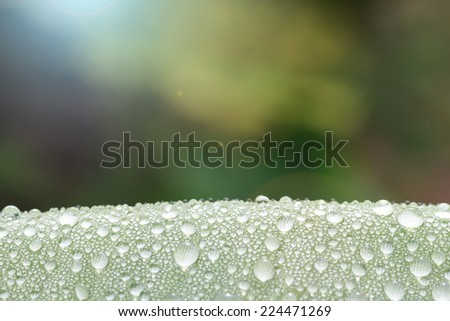 water drop on leaf in morning - stock photo
