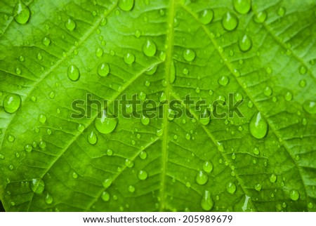 Water drop on leaf. Texture,  background